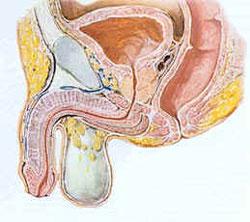 Disfunzione erettile (DE) - Problemi di salute degli uomini - Manuale MSD, versione per i pazienti